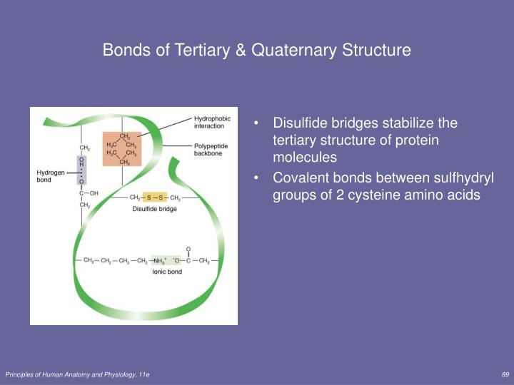 Bonds of Tertiary & Quaternary Structure