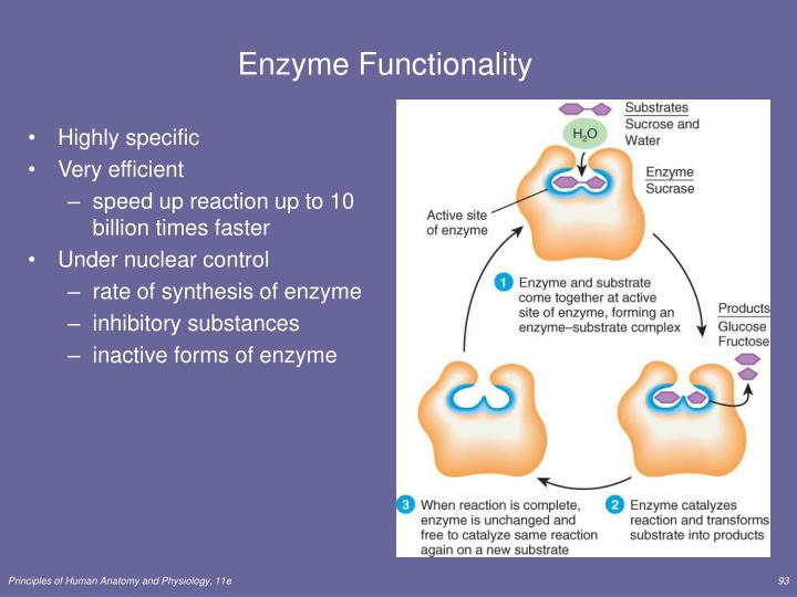 Enzyme Functionality
