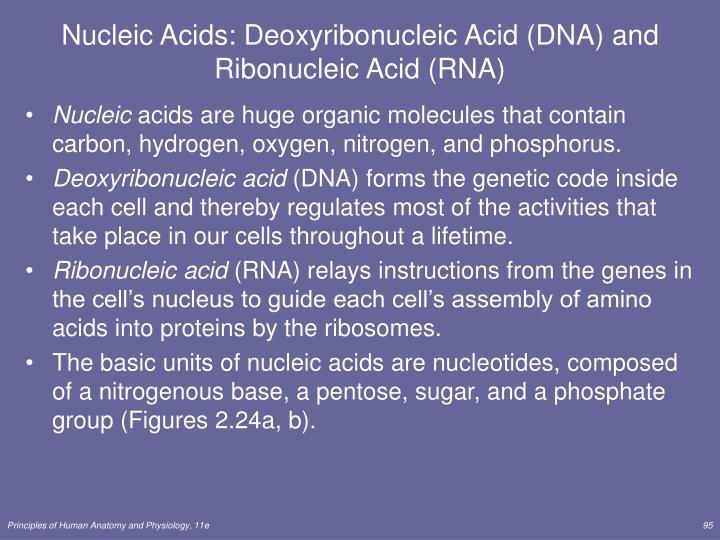 Nucleic Acids: Deoxyribonucleic Acid (DNA) and Ribonucleic Acid (RNA)