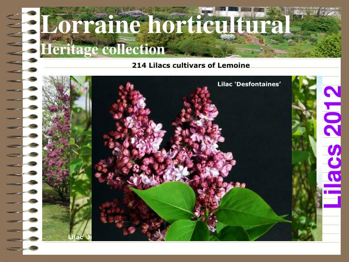 Lorraine horticultural