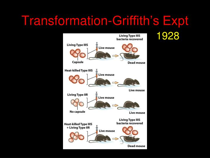 transformation griffith s expt n.
