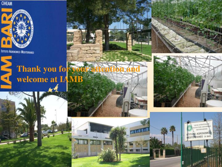 Thank you for your attention and welcome at IAMB