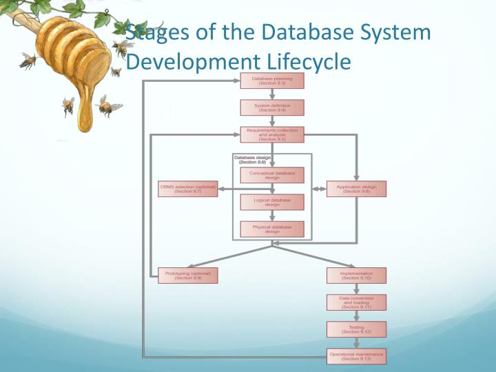 Stages of the database system development lifecycle