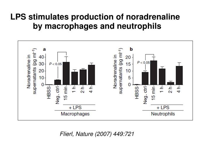 LPS stimulates production of noradrenaline