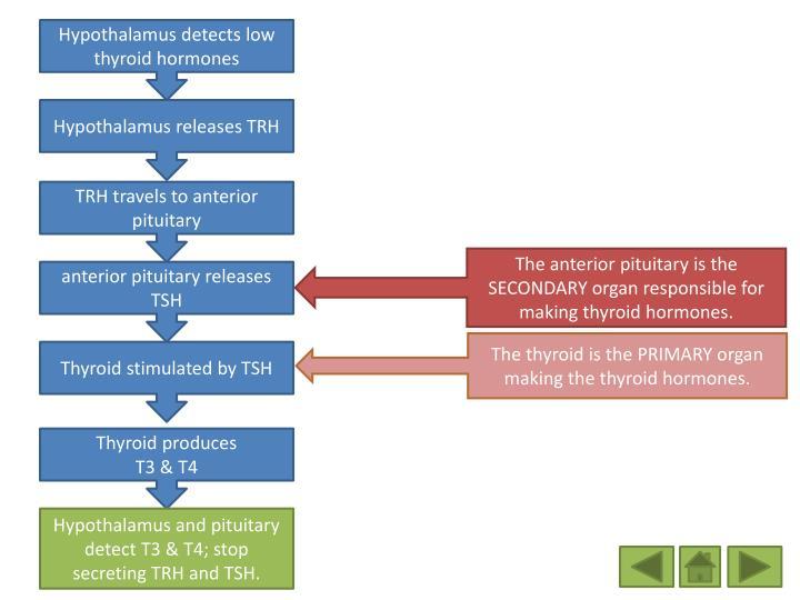 Hypothalamus detects low thyroid hormones