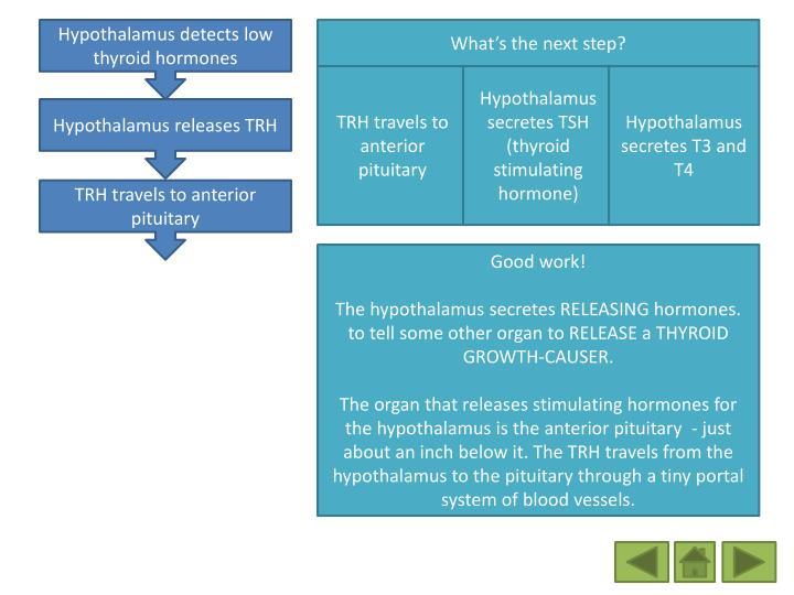 Hypothalamus detects low