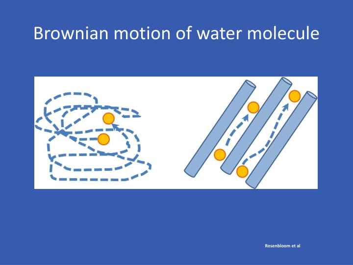 Brownian motion of water molecule