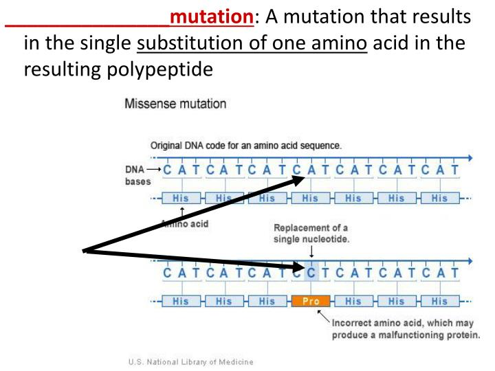 _______________mutation