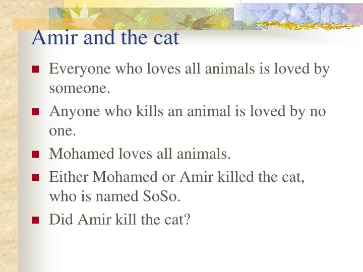 Amir and the cat