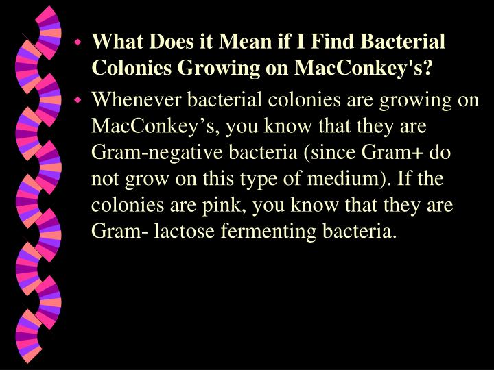 What Does it Mean if I Find Bacterial Colonies Growing on MacConkey's?