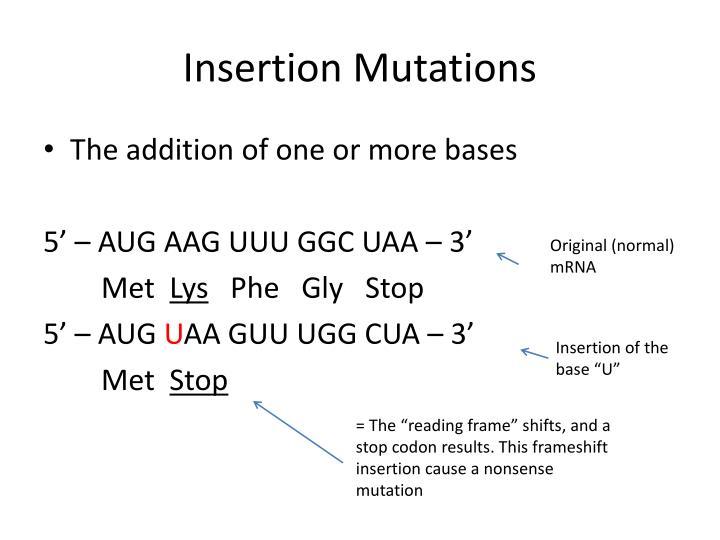 Insertion Mutations