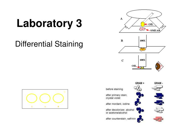 differential staining lab report