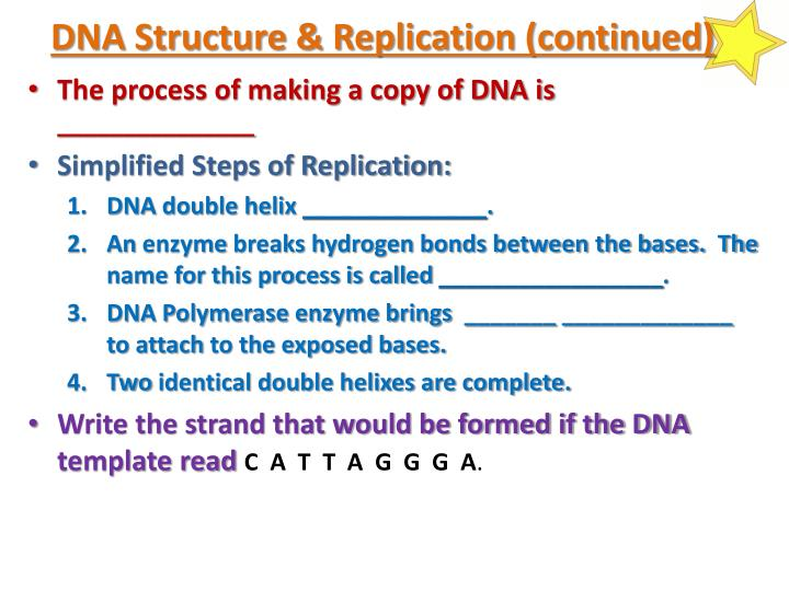 DNA Structure & Replication (continued)