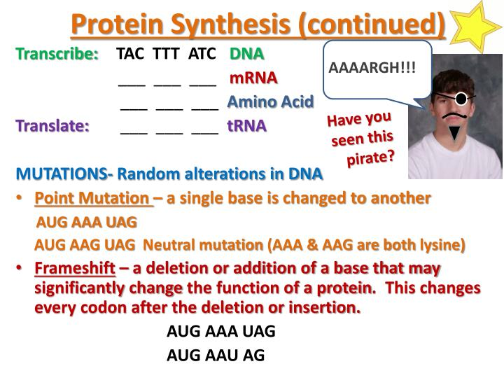 Protein Synthesis (continued)