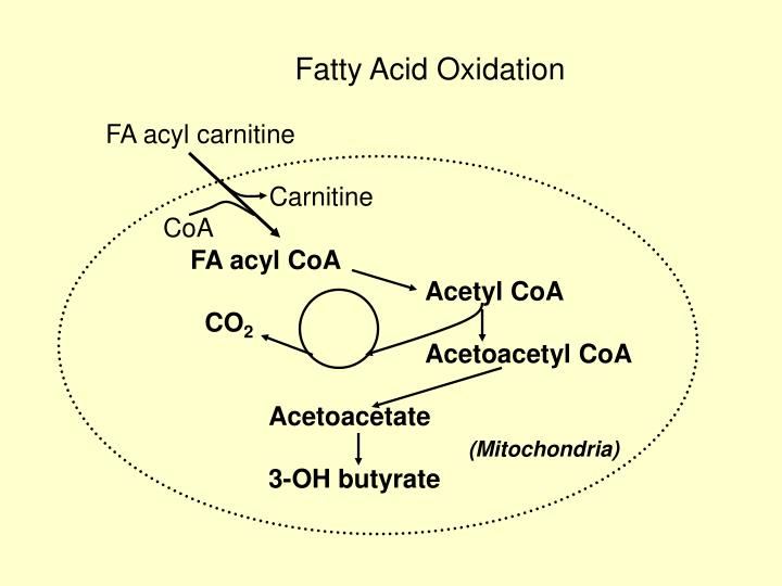 Fatty Acid Oxidation