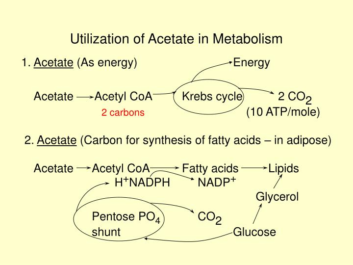 Utilization of Acetate in Metabolism