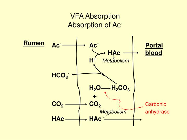 Vfa absorption absorption of ac