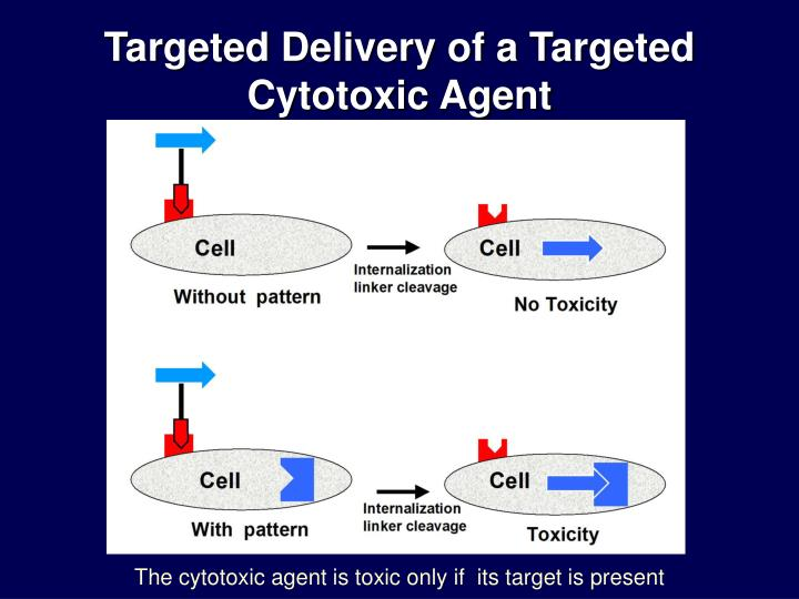 Targeted Delivery of a Targeted Cytotoxic Agent