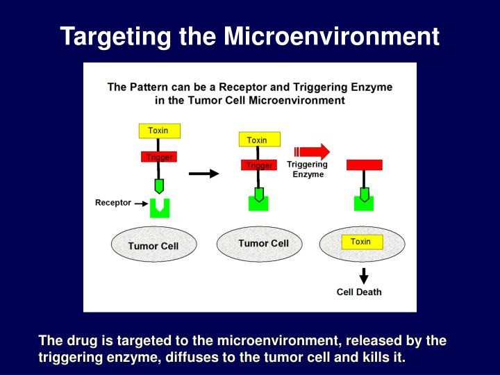 Targeting the Microenvironment