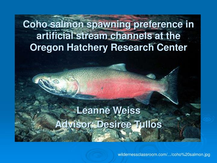 Coho salmon spawning preference in artificial streamchannels at the