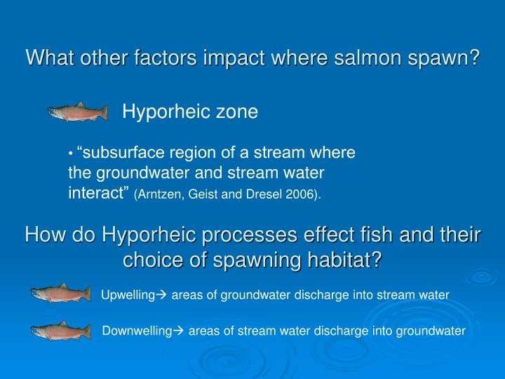 What other factors impact where salmon spawn?