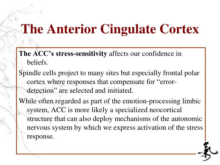 The Anterior Cingulate Cortex