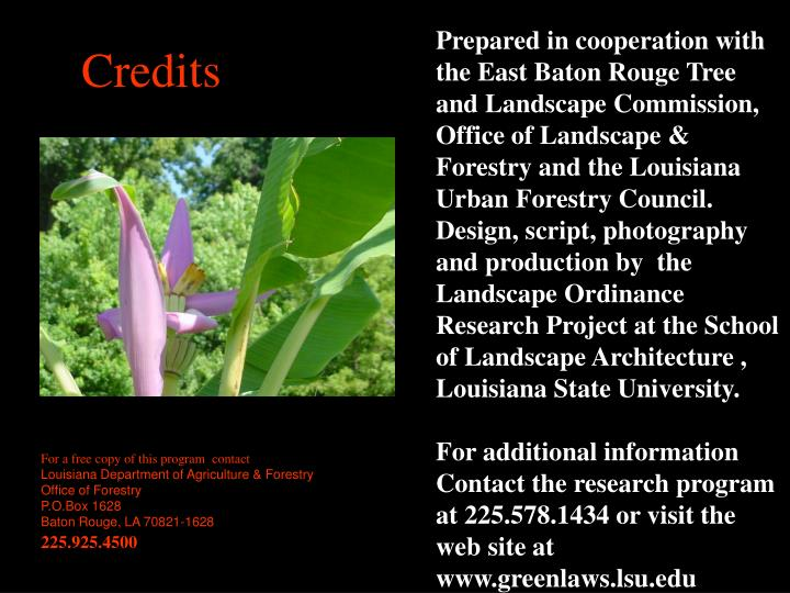 Prepared in cooperation with the East Baton Rouge Tree and Landscape Commission, Office of Landscape & Forestry and the Louisiana Urban Forestry Council.