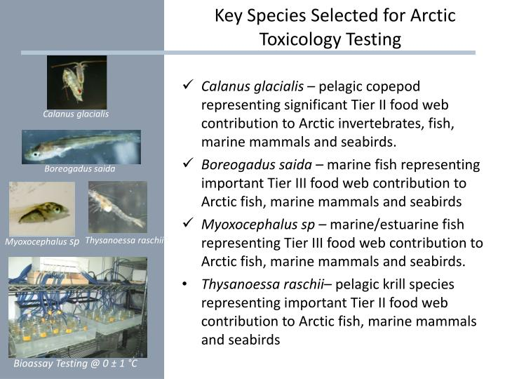 Key Species Selected for Arctic            			Toxicology Testing