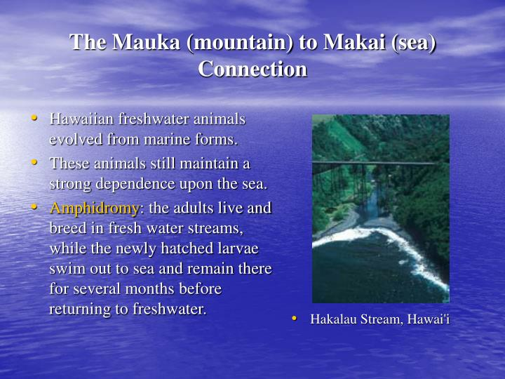 Hawaiian freshwater animals evolved from marine forms.