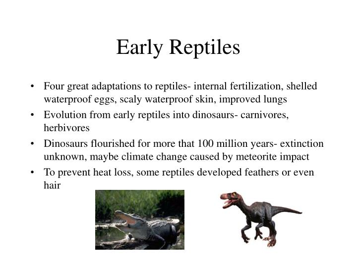 Early reptiles