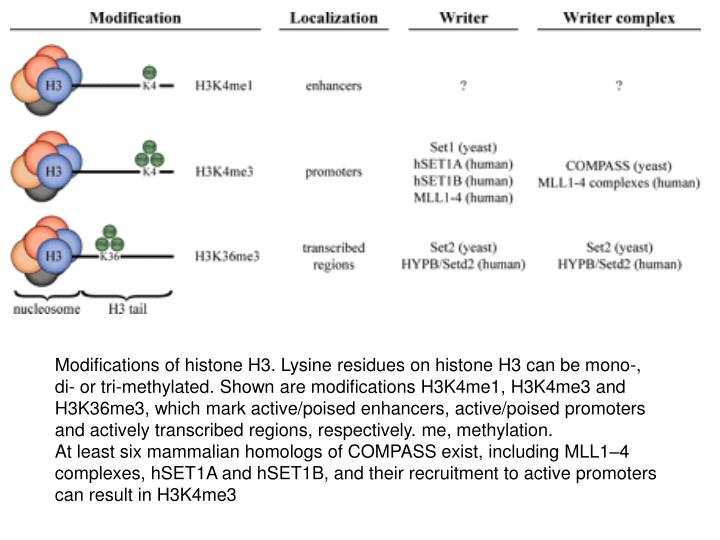 Modifications of histone H3. Lysine residues on histone H3 can be mono-, di- or tri-methylated. Shown are modifications H3K4me1, H3K4me3 and H3K36me3, which mark active/poised enhancers, active/poised promoters and actively transcribed regions, respectively. me, methylation.