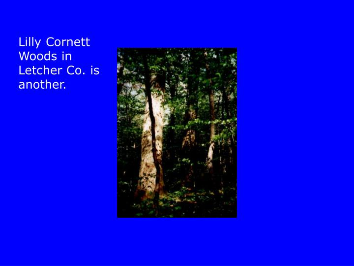 Lilly Cornett Woods in Letcher Co. is another.