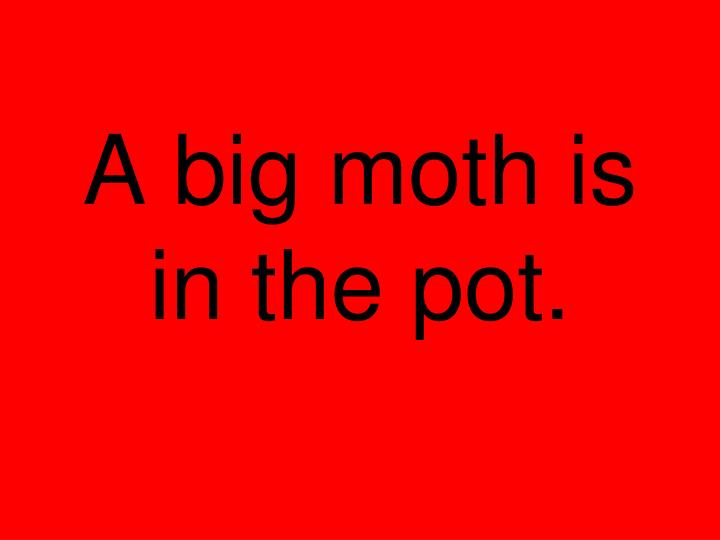 A big moth is in the pot.