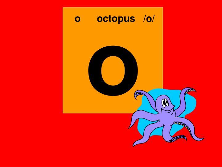 ooctopus   /o/