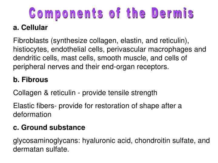 Components of the Dermis