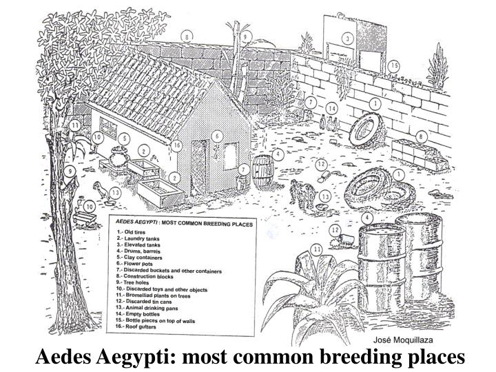 Aedes Aegypti: most common breeding places