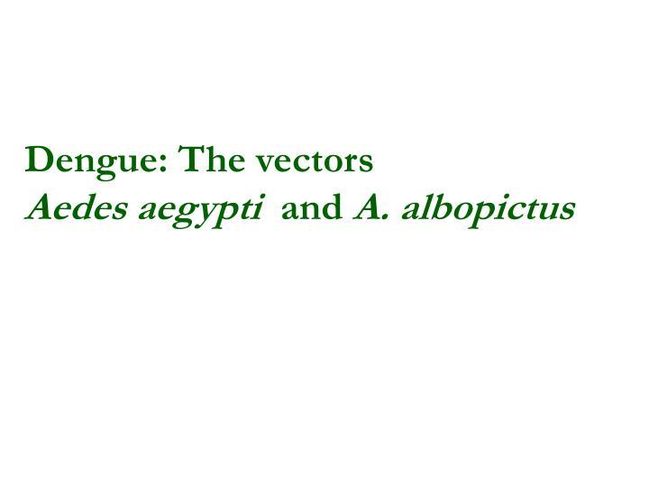 Dengue: The vectors