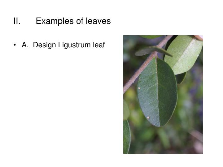 II.	Examples of leaves