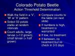 colorado potato beetle action threshold determination