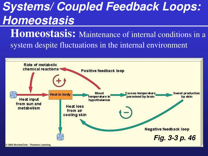 Systems/ Coupled Feedback Loops: Homeostasis