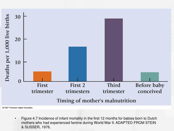 Figure 4.7 Incidence of infant mortality in the first 12 months for babies born to Dutch mothers who had experienced famine during World War II. ADAPTED FROM STEIN & SUSSER, 1976.