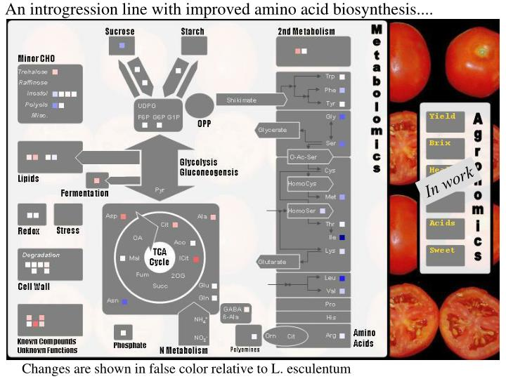 An introgression line with improved amino acid biosynthesis....
