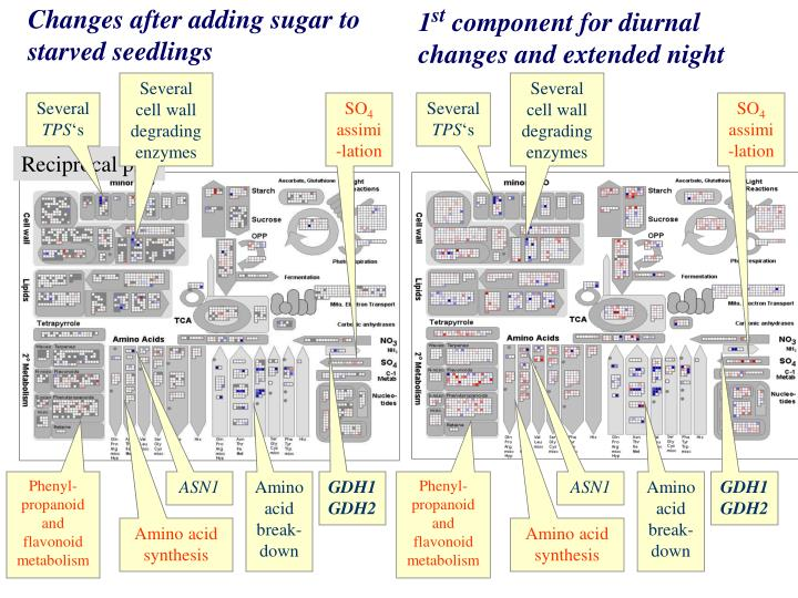 Several cell wall degrading