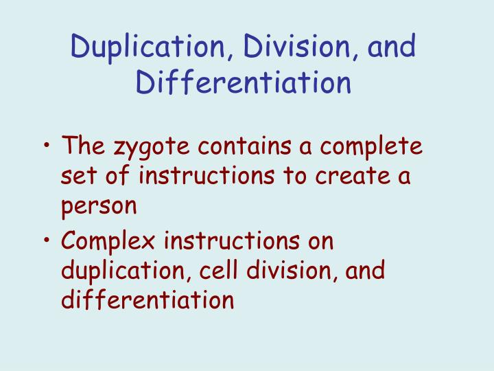 The zygote contains a complete set of instructions to create a person