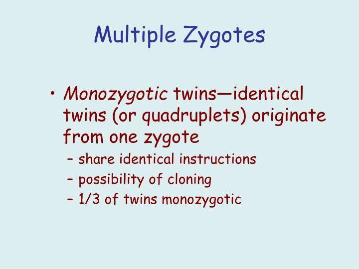 Multiple Zygotes