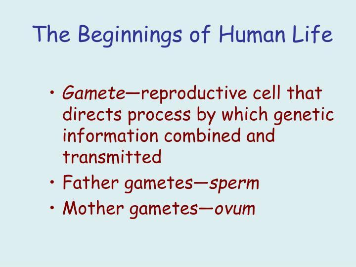 The Beginnings of Human Life