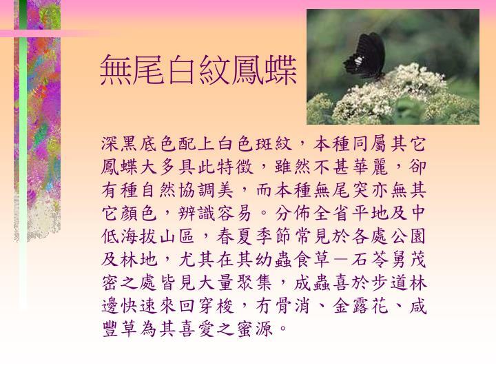 無尾白紋鳳蝶