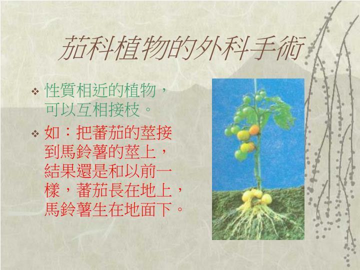 茄科植物的外科手術
