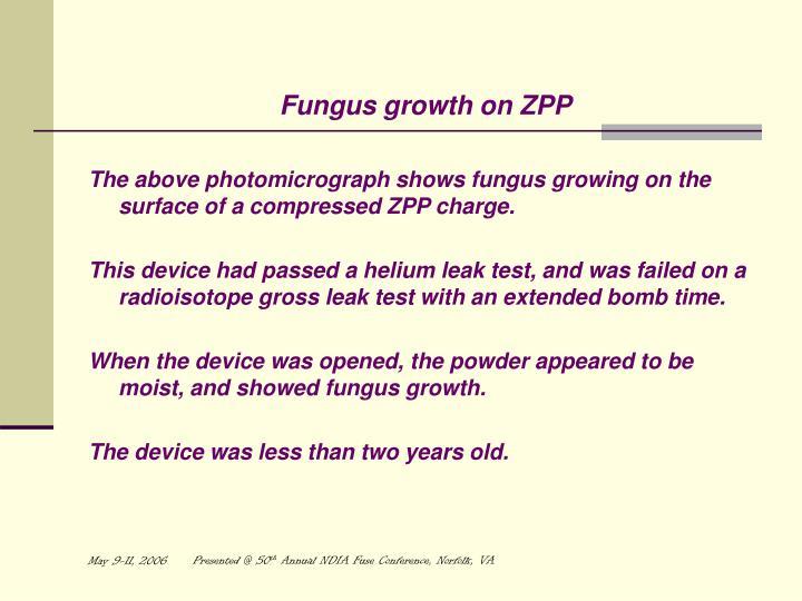 Fungus growth on ZPP
