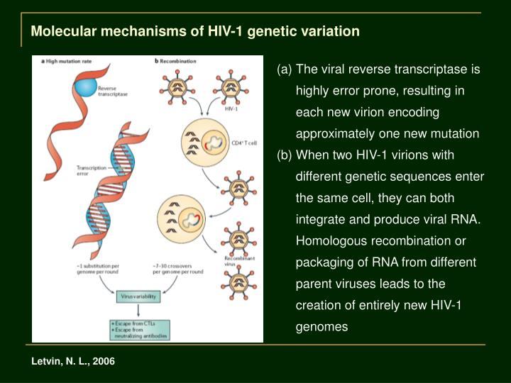 Molecular mechanisms of HIV-1 genetic variation